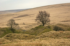 _DSC0055 - Two trees (SWJuk) Tags: swjuk uk unitedkingdom gb britain england lancashire burnley home sheddonclough limestone historic mining smelting trees hills hillside moors moorland 2018 apr2018 spring nikon d7100 nikond7100 nikkor70200mm rawnef lightroomclassiccc
