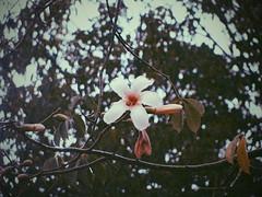 El reflex murio, pero el arte no (4nnto) Tags: flower flowers white nature sheet branch sky blue yellow brown cute vintage cool sweet beauty beautiful petals winter autumn primrose spring