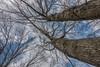 DSC00160 (johnjmurphyiii) Tags: 06416 clouds connecticut cromwell originalarw shelly sky sonyrx100m5 spring usa yard johnjmurphyiii