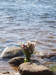 russian bouquet (cloversun19) Tags: water rock flower flowers story tenderness positive russian branch russianbranch river neva see nevariver branchofchamomiles chamomiles chamomile stone stones spray waves summer country romantic love lovestory someday shore coast morning gift birthday beauty glory fairytale happy blooming blossoming blossom bloom flowering