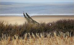 Dunes, mer du Nord et plage, Dombourg, Walcheren, Zeelande, Nederland (claude lina) Tags: claudelina nederland hollande paysbas zeelande zeeland dombourg domburg strand beach piquets merdunord oyat dune