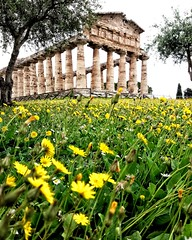Paestum (uffagiainuso) Tags: atena tempio heritage worldheritage worldheritagesite heritageworld ancientworld yellow flower spring seasons dreamscapes architettura areaarcheologica archeologico landscapearchitecture architekture architecture dandelion dentedeleão dentedileone dorico colonne stiledorico builtstructure oldbuilding