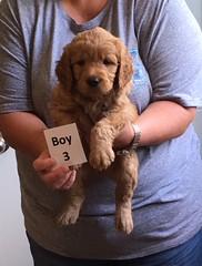Ella Boy 3 pic 4 4-21