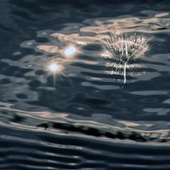 Time goes in moments (Robyn Hooz) Tags: drops gocce cerchi circles acqua water rain pioggia padova alba dawn