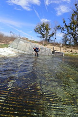 Cleaning A Fish Counting Weir