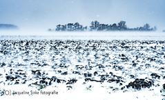 Sneeuwstorm in Zeeland (Omroep Zeeland) Tags: 2018 landschap sneeuw sneeuwstorm