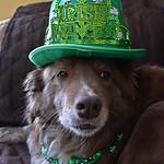 ☘️ Irish Princess!☘️ thumbnail