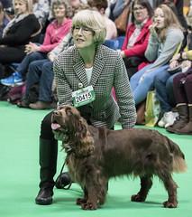 GAZ_1263 (garethdelhoy) Tags: dog sussex spaniel crufts 2018 kennel club