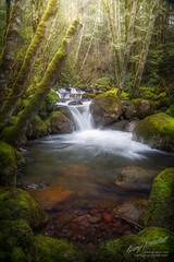 Creekside in Oregon (Gary Randall) Tags: gar00492 oregon creek waterfall forest pacificnorthwest landscapephotography