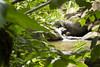 Rio (Maria A Monteiro) Tags: rio cascata água árvores folhas river cascade water trees leaves rivière eau arbres feuilles pedras stones
