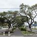 Georgetown tree-lined avenue