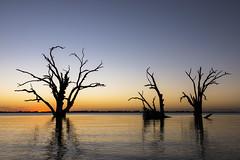 Lake Bonney - Australia (wietsej) Tags: lake bonney australia sony rx10 rx10m4 iv sunset dead trees