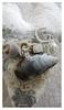 winter beachcombing textile art heart (Carolyn Saxby) Tags: winter beachcombing beachfinds shells beads stitch textiles textileart heart carolynsaxby white grey silver musselshells paleblue bluegrey
