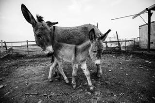 Manuel e Asso, piccoli campioni crescono. Aprile 2018