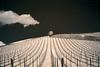 2018 04 14 Puff, the Magic Dragon and Baum Johannisberg - 4 (Mister-Mastro) Tags: fullspectrum ir720nm johannisberg wein vine vineyard rebstöcke baum wolke cloud