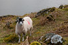 There's Always One... (russell_w_b) Tags: crummock lorton cumberland cumbria