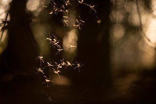 Here Be Faeries