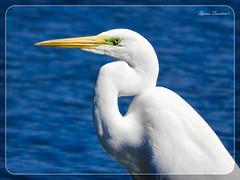 Ερωδιός - Αργυροτσικνιάς !!! (Spiros Tsoukias) Tags: hellas thessaloniki flamingo καλοχώρι δήμοσ δέλτα φλαμίνγκο φοινικόπτερα ερωδιοί αργυροπελεκάνοι αργυροτσικνιάδεσ λευκοτσικνιάδεσ βαρβάρεσ γεράκια πάπιεσ φαλαρίδεσ θεσσαλονίκη ορνιθοπανίδα πάρκοκέρκυρασ υδρόβιαπτηνά γαλλικόσ αξιόσ λουδίασ αλιάκμονασ εθνικόπάρκο δέλτααξιού ελλάδα μακεδονία πουλιά λιμνοθάλασσα φύση ποτάμια greece macedonia birds lagoon nature rivers grecia uccelli laguna natura fiumi griechenland mazedonien vogel lagune natur flusse grece macedoine oiseaux rivieres axiosdelta nationalpark aquaticbirds