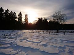 Frühlingswiese (michaelmueller410) Tags: schnee snow eis ice bäume wald trees forest sun sundown sunset sunlight sturm zaun fence harz oberharz clausthal wolken clouds sky