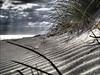 Les dunes changent, mais le soleil reste toujours le même. Ainsi en sera-t-il de notre amour. L'Alchimiste - Paulo Coelho (Phoebus58) Tags: plage beach ride ripple dune bretagne brittany olympus