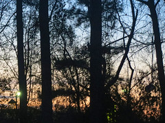 Trees And Sky. (dccradio) Tags: lumberton nc northcarolina robesoncounty outside outdoors nature tree trees natural sky colorfulsky monday evening dusk sunset treebranches branch branches treelimbs eveningsky