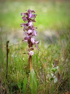 Orchidee, la passione