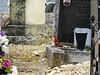 Le gardien du cimetière !!! (François Tomasi) Tags: écureuil animal françoistomasi tomasiphotography yahoo google flickr justedutalent