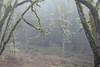 Mount Talbert (Tony Pulokas) Tags: spring oregon portland mttalbert mounttalbertnaturepark bokeh blur mounttalbert tilt tree forest oak oregonoak lichen fog moss fern licoricefern
