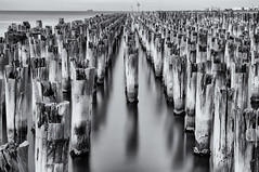 The Princes Pier (Pat Charles) Tags: princepier portmelbourne newrailwaypier melbourne victoria australia nikon longexposure tripod pier jetty pylon pylons water sea ocean beach reflection reflected reflections portphillipbay city urban blackwhite bw monochrome black white timber graveyard dead death old abandoned abandon deserted forsaken castaside forgotten unused neglected neglect derelict leadinglines horizon sky ship shipping lane route port