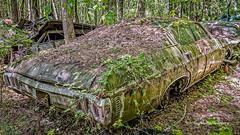 Old Car City 86 (augphoto) Tags: augphotoimagery abandoned auto automobile car decay old weathered white georgia unitedstates