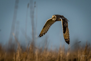 SEO in flight