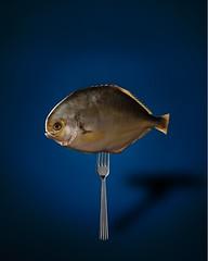 Fish on fork (dr_scholz@ymail.com) Tags: fish fork reflections shadow blue yellow studio surreal indoors water canon5dmkii zeissmilvus2100m milvus2100m milvus1002ze