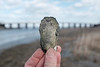 Diamond in the Rough (reclaimednj) Tags: 2018 saltmarsh newjersey greatbayblvdwma greatbay nj littleeggharbortownship littleeggharbor oceancounty oyster fujifilmx100t