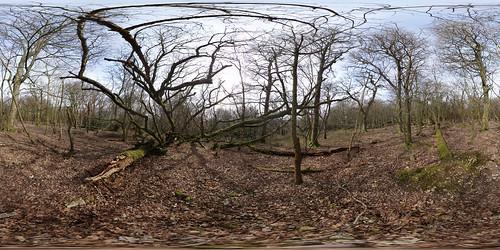 Ashcombe Bottom Winter Woodland 360° Panorama [Equirectangular]