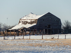 03 On its way down (annkelliott) Tags: alberta canada eofcalgary building architecture barn old wooden roof collapsing fence field rural ruraldecay ruralscene abandoned crumbling weathered grass tree snow likewinter sky outdoor fall autumn 6november2017 fz200 fz2004 panasonic lumix annkelliott anneelliott ©anneelliott2017 ©allrightsreserved