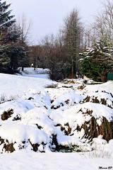 Photos Marco BP (32)_GF (marcbihanpoudec) Tags: bretagne neige plabennec plan deau lac banc arbres