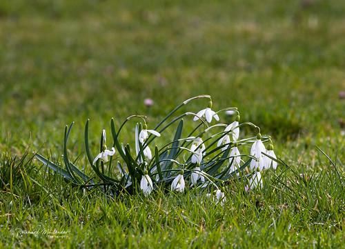 Frühling?
