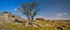 Lone survivor (trojanhorse1956) Tags: tree grass sky rock tor king dartmoor devon landscape nikon clouds