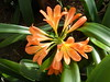 DAY LILY (kelsey61 ( AWAY WED-FRI THIS WEEK)) Tags: daylily lily fleur flores flor