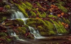 haut de la chute Forillon (Micdes 2013) Tags: chute eau forillon paysage