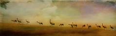 Spring is here. (BirgittaSjostedt) Tags: grusgrus crane bird spring landscape texture paint birgittasjostedt
