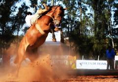 Anderson dos Santos e Emília (Eduardo Amorim) Tags: gaúcho gaúchos gaucho gauchos cavalos caballos horses chevaux cavalli pferde caballo horse cheval cavallo pferd pampa campanha fronteira quaraí riograndedosul brésil brasil sudamérica südamerika suramérica américadosul southamerica amériquedusud americameridionale américadelsur americadelsud cavalo 馬 حصان 马 лошадь ঘোড়া 말 סוס ม้า häst hest hevonen άλογο brazil eduardoamorim gineteada jineteada
