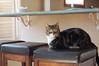 Boo 2 (hollyzade) Tags: animal animals pet domesticated cat cats eyes neutral cute ears chat katze gato neko bili nikon d40 nikond40