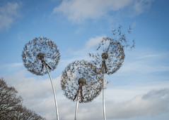 let it go (Emma Varley) Tags: dandelion sculpture seed trenthamgardens stokeontrent noworries relaxing hoilidays robinwight thefairyman