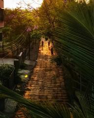 Golden Hour at Aurangabad, Maharashtra (sairamreddy3) Tags: photography photographer world street aurangabad maharashtra india mobilephotography shotonmobile redmi4 xiaomi mi