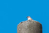 S18X4058 (Daegeon Shin) Tags: fujifilm xpro2 xf55200 55200 bird ave pájaro gorrión sparrow passermontanus sky cielo animal 후지 후지논 새 조류 참새 하늘 동물