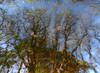 Superficial Small-Talk (andressolo) Tags: reflections reflection reflected reflect reflejo ripples reflejos río stream pond water trees tree abstract abstracto leaves distorted distortion distortions