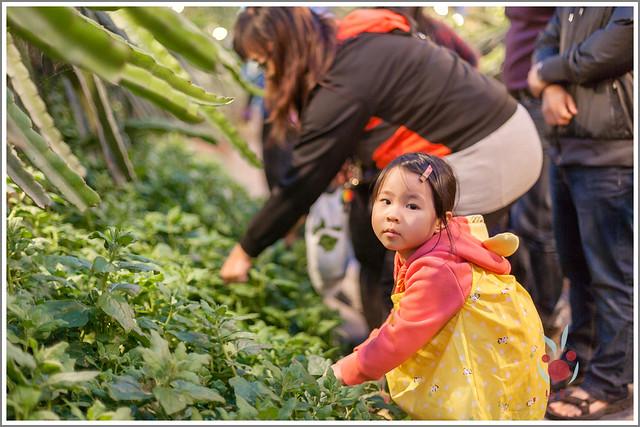 火龍果園星光野餐Ⅱ 找地瓜 烤地瓜 吃地瓜 (23)