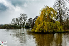 Clive_DSC8728 (Nick Woods Photography) Tags: landscape view viewpoint riverview river riverthames water waterscape waterreflections waterscene freshwater trees treereflections cliveden nationaltrust nt