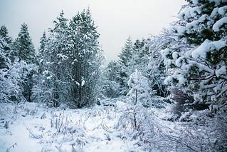 Snow in the forest of Öskjuhlíð in Reykjavík, Iceland